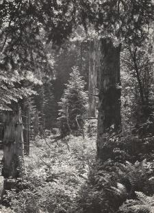 Les dvojčata zavěsit